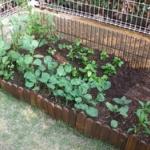 おい!家に庭があるやつは今すぐ耕せ!