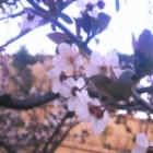 『春の気配。』の画像