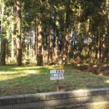 『山武市埴谷 雑木林に覆われた分譲地』の画像
