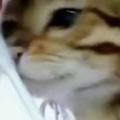 【ネコ】 歯磨きをしていたら猫がやってきた。ごしごしスリスリ♪ → うちの猫はこうなります…