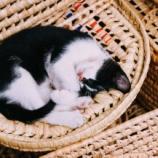 『猫はなぜかわいいのか!』の画像
