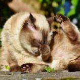 『動物の不思議 ネコの反射神経に唖然とする人が続出』の画像