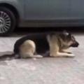 イヌが駐車場にいた。姿勢を低くしてスルル~♪ → 寒い日の犬はこうなります…