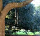 米ミシシッピで木に吊るされた縄が7ヶ所で見つかり大騒ぎに 地元当局が捜査中