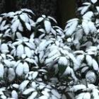 『正月は新しい気持ちで。』の画像