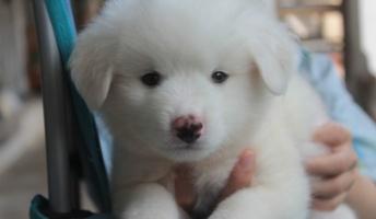 【朗報】うちの犬、3歳になる。可愛から紹介したいwwwww