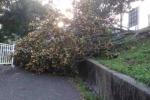 台風の影響で倉治公園の樹木が倒れて道を塞いでたみたい【情報提供:ちくらさん】