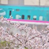 『桜と都電と新幹線 in 飛鳥山公園』の画像