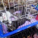 『激安猫ちゃんアニマルマーケット。アルマトイ→ビシュケク』の画像