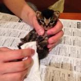 『子猫すくすく…』の画像