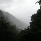『雨の日のコウモリ』の画像