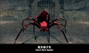 君なんか写真と違わない? 巨大赤クモ