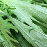 『サラダを作ろうとしたら水菜に・・・』の画像
