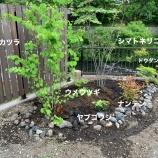 『【庭造り】DIYで安くできる庭の植栽』の画像