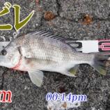 『気温も釣果も寒い!周防大島の黒鯛(チヌ)釣り #019』の画像