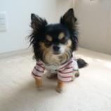 『愛犬とおうち時間🐾知育TOYで遊ぼう♪  📝』の画像