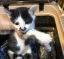 天井裏で生まれた? 寺の鐘楼から下りられなくなった子猫救出 「かねこ」と命名