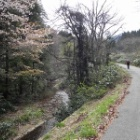 『船通山(1142.5m) April,23,2013』の画像