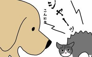 犬と猫の最初の「ふれあい」