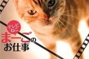 トラネコ政治猫の「まーご」が嫌った政治家