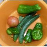 『今日の収穫。』の画像
