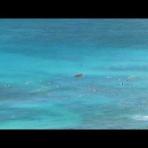 ワイキキの小さい宿 アロハコンドのワイキキビーチ生情報