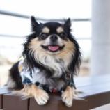 『丘の上の避暑地で、アイドル犬撮影会♡』の画像
