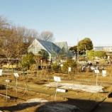 『1月の都立薬用植物園』の画像