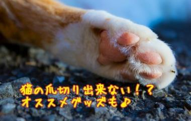 『猫の爪切り裏ワザで 簡単に!!』の画像