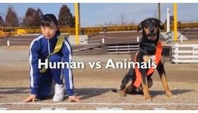 【日本のCM】  奇妙で 面白い!! 人間と 動物の「視点」からみる 牧場物語(ゲーム)の 競争レースのCM。  海外の反応