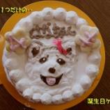 『愛犬のお誕生日にはカワイイ似顔絵ケーキ』の画像