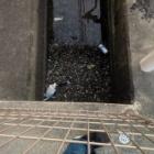 『【水生生物】【ゴミ】水路にイッパイ【写真あり】』の画像