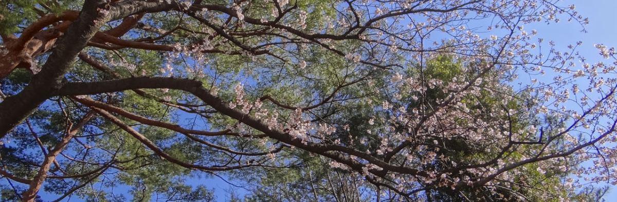 蘆花公園 ザ・レジデンス建設と周辺環境を考えるBlog イメージ画像