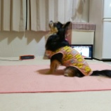 『ZOOMでヨガに参加しました☆』の画像