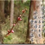 『フォト短歌「小枝の蕾」』の画像