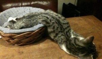 【画像】猫って液状なのか????