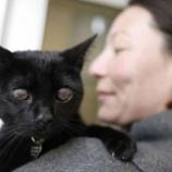 『善意の連鎖:目の不自由な猫ちゃん米国横断の旅』の画像