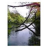 『雲場池1』の画像