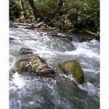 『石が顔を出す』の画像