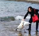 【画像】観光客が湖から白鳥を強引に引っ張り出して記念写真を撮り、白鳥が死亡