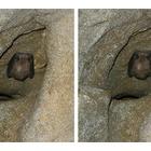 『厚みのある生き物』の画像