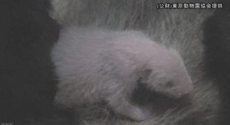 【どうぶつ】上野動物園に誕生のパンダ メスと確認