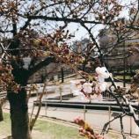 『もうすぐ春ですね!4月の講演会の受付が始まりました♪』の画像