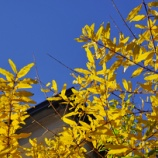 『【写真】 後楽園の紅葉 a7R 作例』の画像