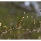 『春を迎えた森』の画像