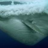 『海の動画』の画像