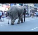 街中に野生のゾウが出現し市民ら騒然。インド