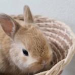 スーパービバホーム埼玉大井店 小動物コーナーのブログ