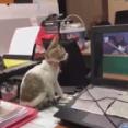 トムとジェリーを子猫2匹に見せたら…画面にかじりつくほど真剣(動画)