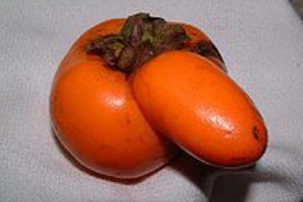 柿くへば鐘が鳴るなり法隆寺 季語